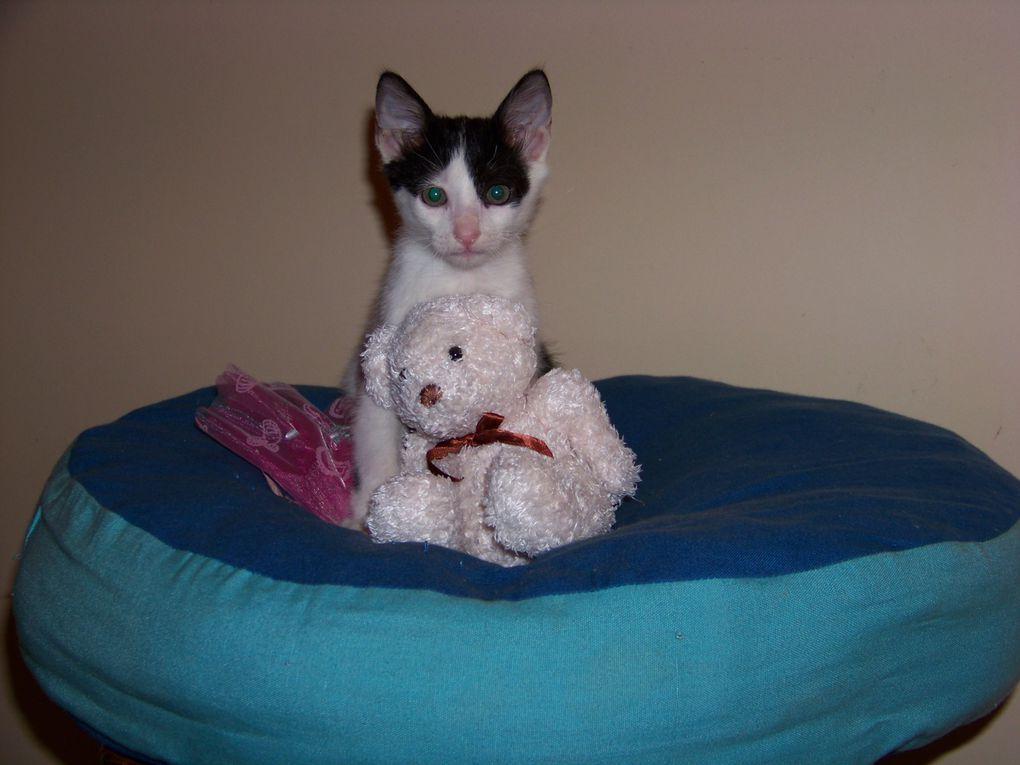 Mes deux petits amours chats.