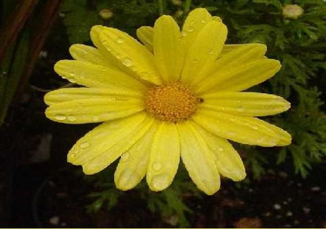 Si la vie est trop dureVa donc dans la nature.0uvre bien grand ton cœurPour y mettre des fleurs