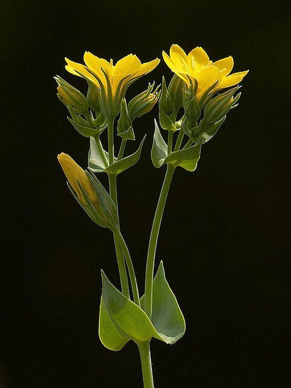 Les Fleurs de Bach sont des élixirs floraux réalisés à partir de trente-huit essences de fleurs. Selon leur concepteur, le Dr Edward Bach, médecin clinicien et homéopathe...