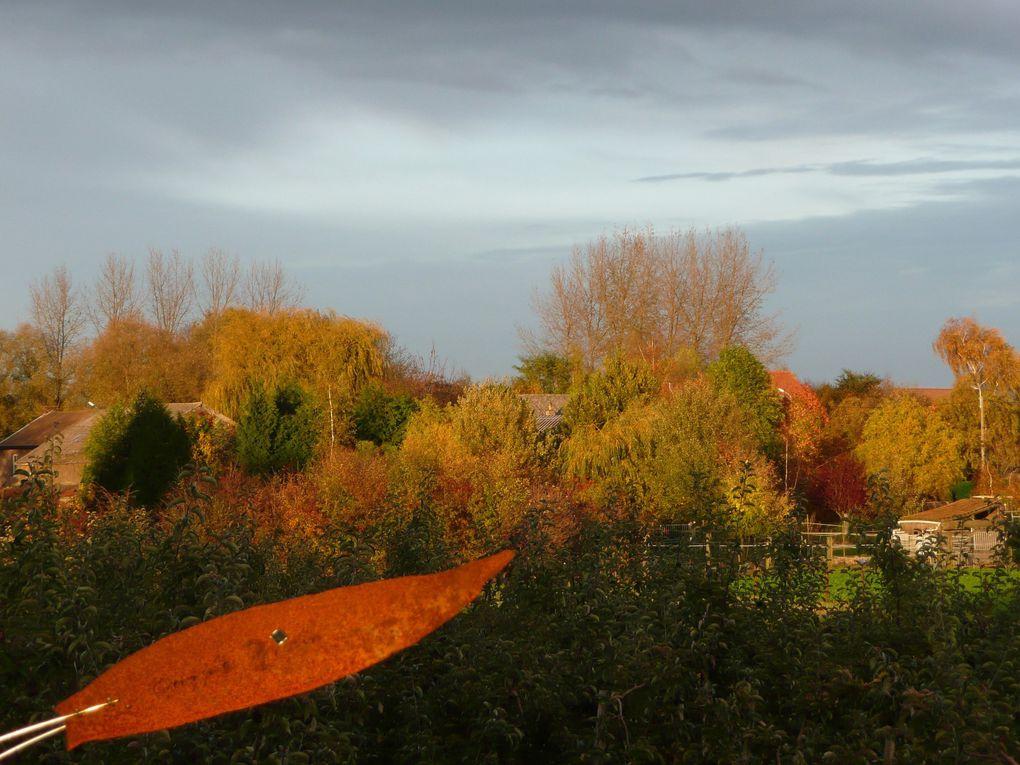 Photos et couleurs d'automne, paysage, feuillages.Autumn's fotos in Belgium