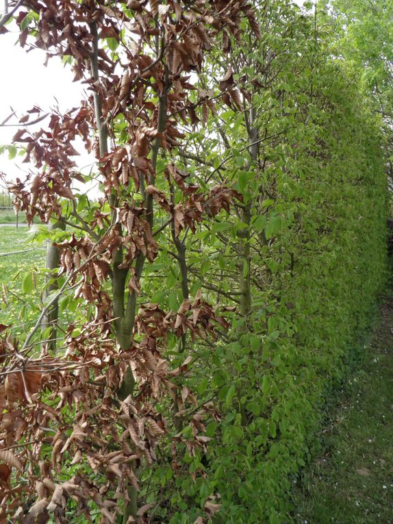 Photos du jardin, des plantes et du ciel en avril et en mai. garden in april and may. Flowers, plants and trees. Fotos.