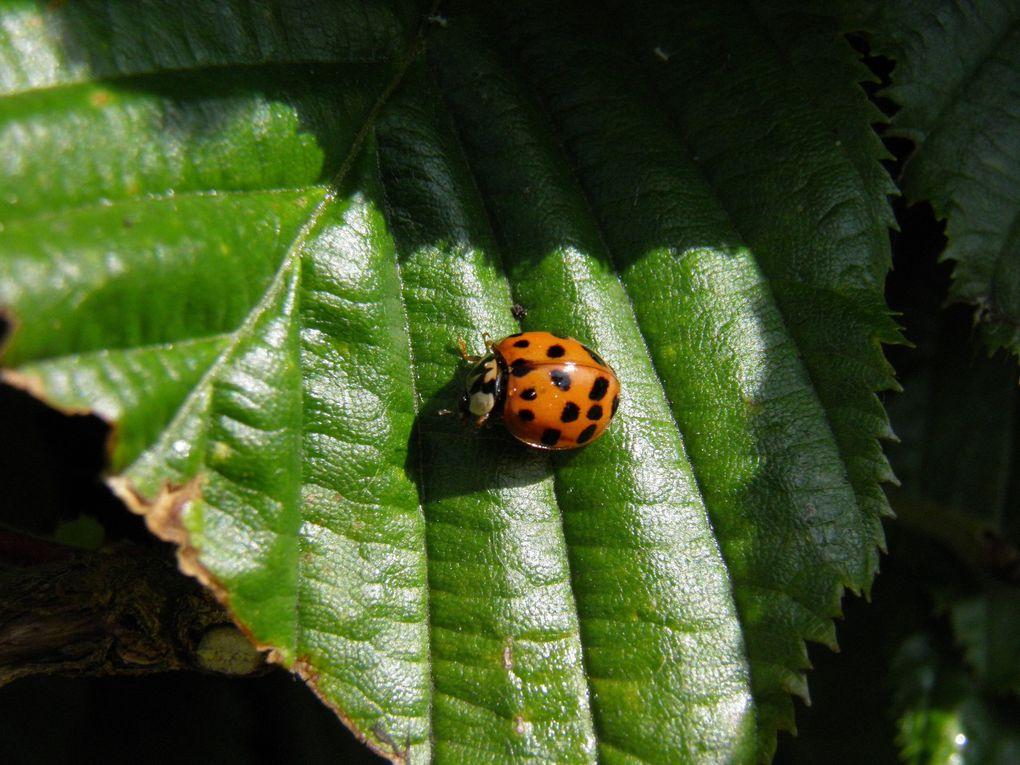 Insectes variés du jardin