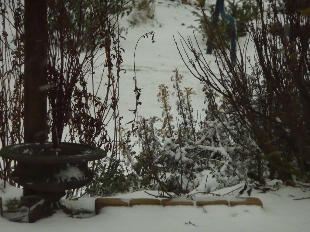 Photos du jardin sous la neige, brumes, glaces, froids.Fotos in the winter in Belgium and France.