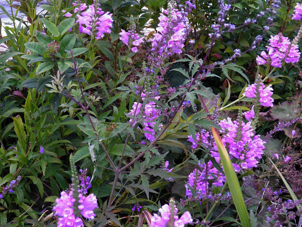 Photos des plantes et fleurs d'automne
