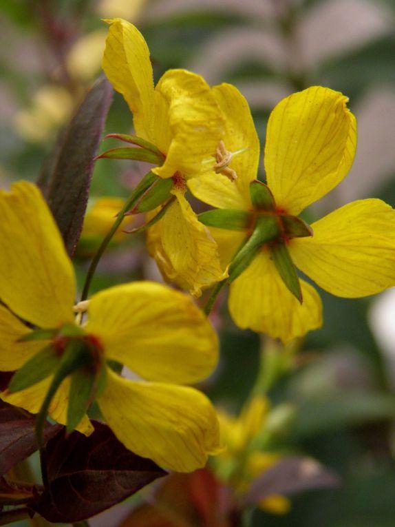 Photos du jardin, des fleurs et plantes remarquables en été. Garden in september. Plants, flowers and roses.