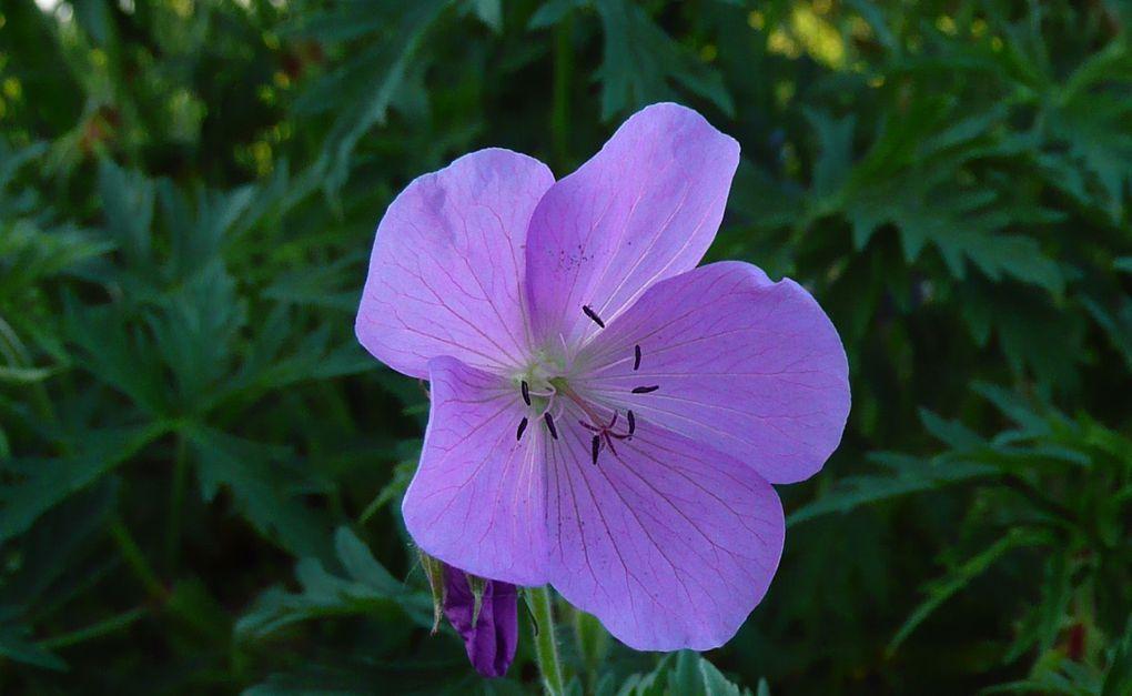 Fleurs, plantes, aménagements du jardin.
