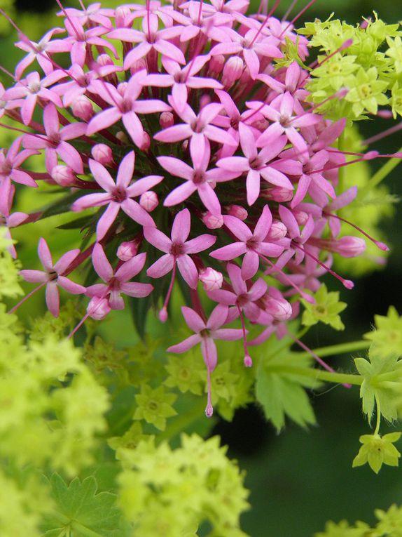 Photos en macro des fleurs et plantes du jardin.Fotos of nature.