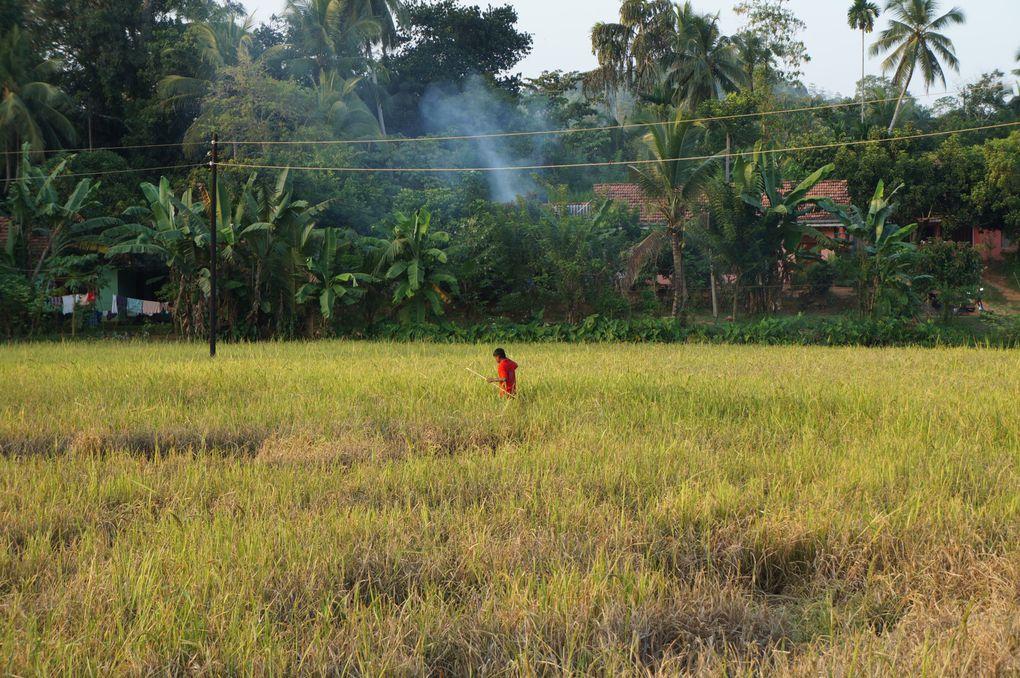 Des images de Ceylan, des couleurs de notre environnement et de notre quotidien tel qu'il a été pendant deux mois.