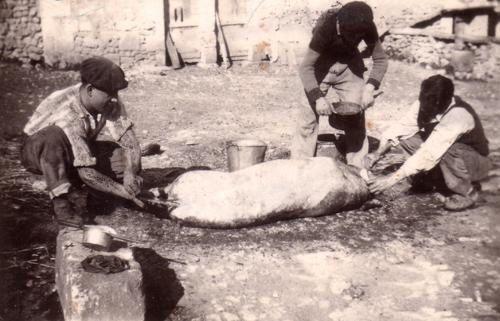 photos le cochon en Périgord dans lesannées 50 et de la réalisation du plat: Enchaud du Périgord.