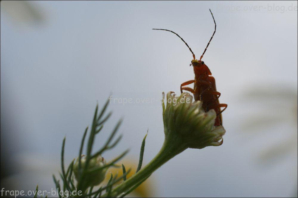 Fotos von den Insekten in unserer Nachbarschaft.