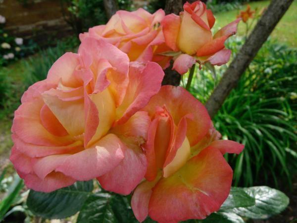 Les fleurs du jardin,