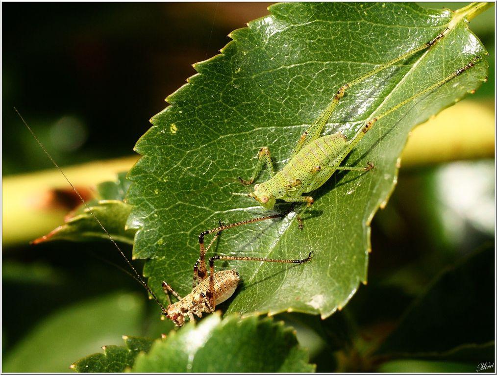 Album - Divers-insectes