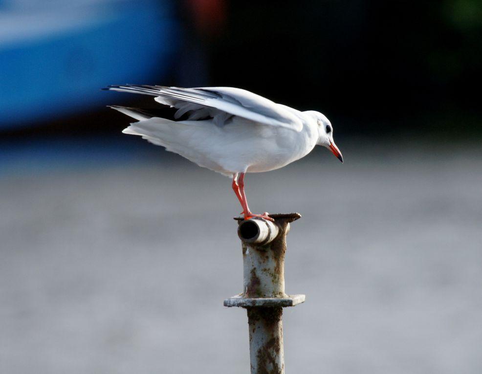 Album - Oiseaux-divers
