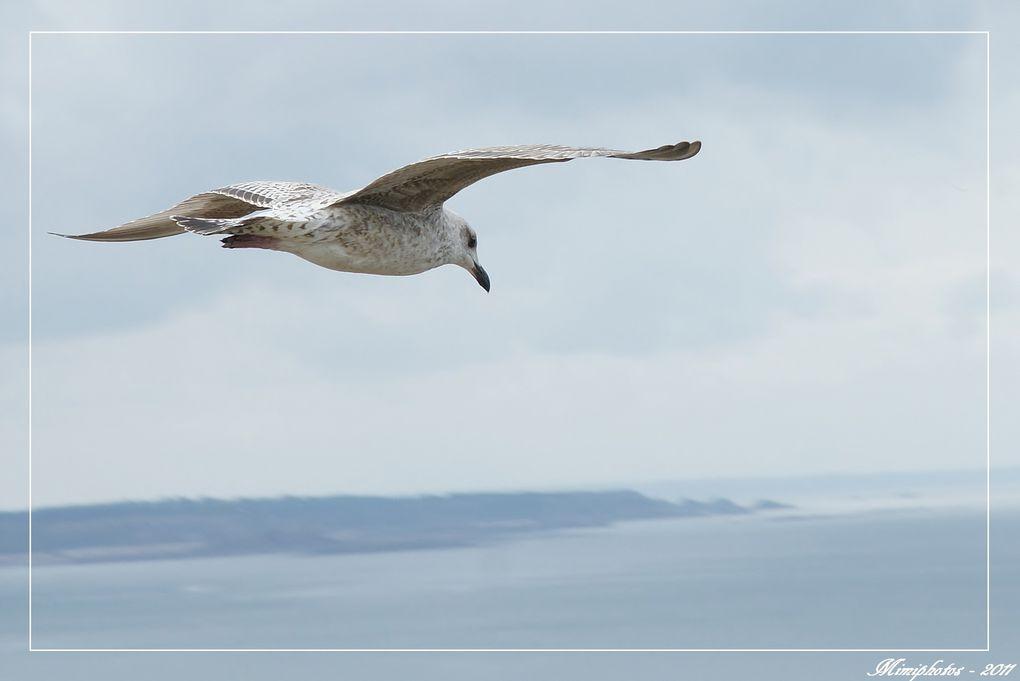 Album - Oiseaux-2011
