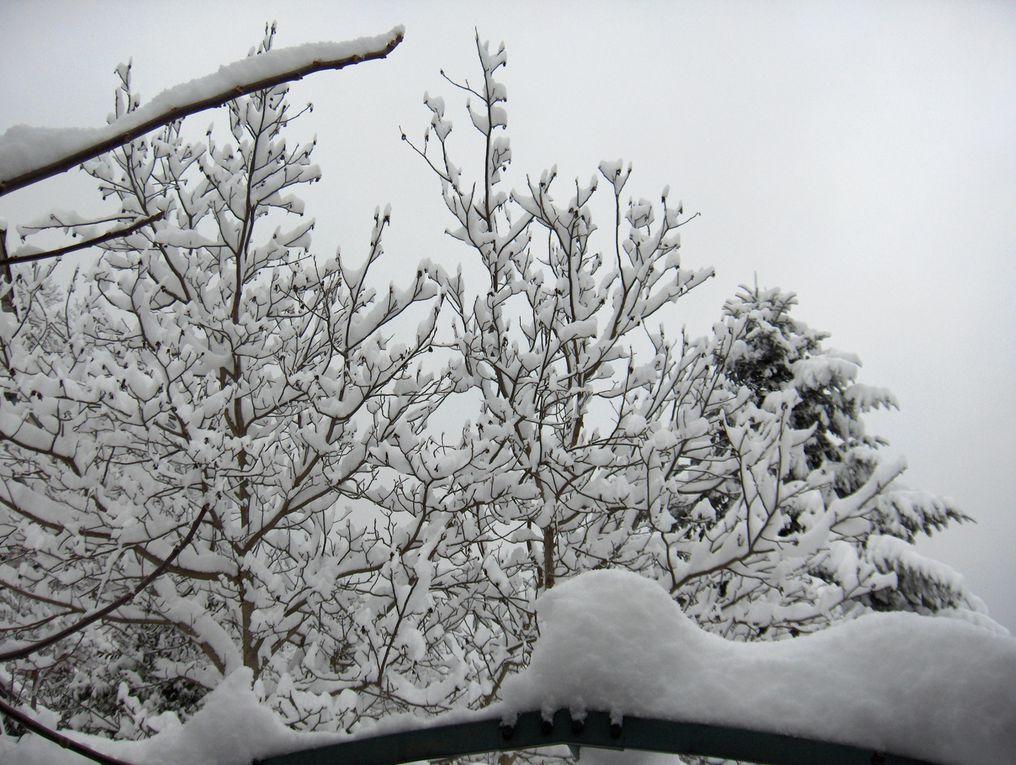 Janvier ..premières floraisons..quelques jours après, la neige et sa magie