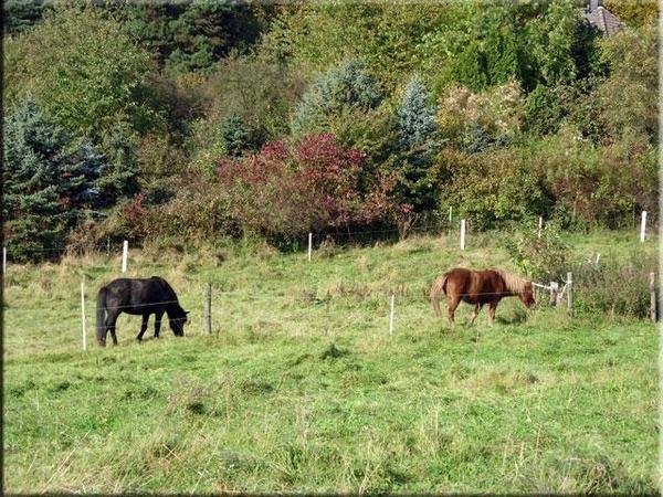 Bilder vom Herbst 2008