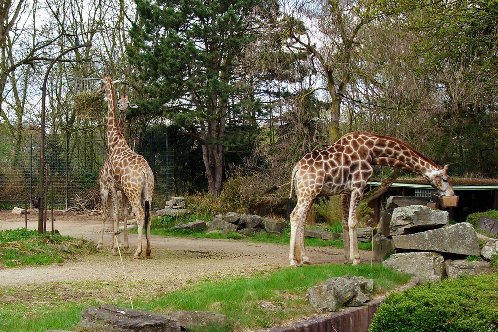 Album - Zoo-Dortmund