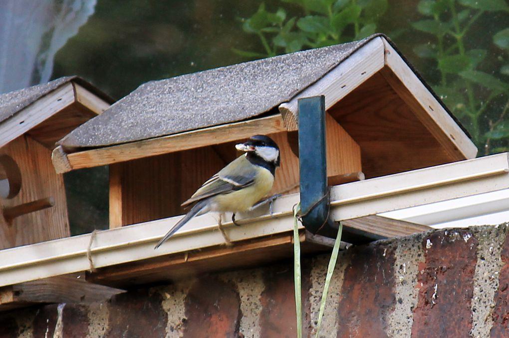 Album - Vögel am Haus und im Garten