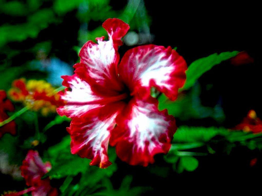 Album Fleurs Des Tropiques Photos Geomar C Fleurs Des Zones