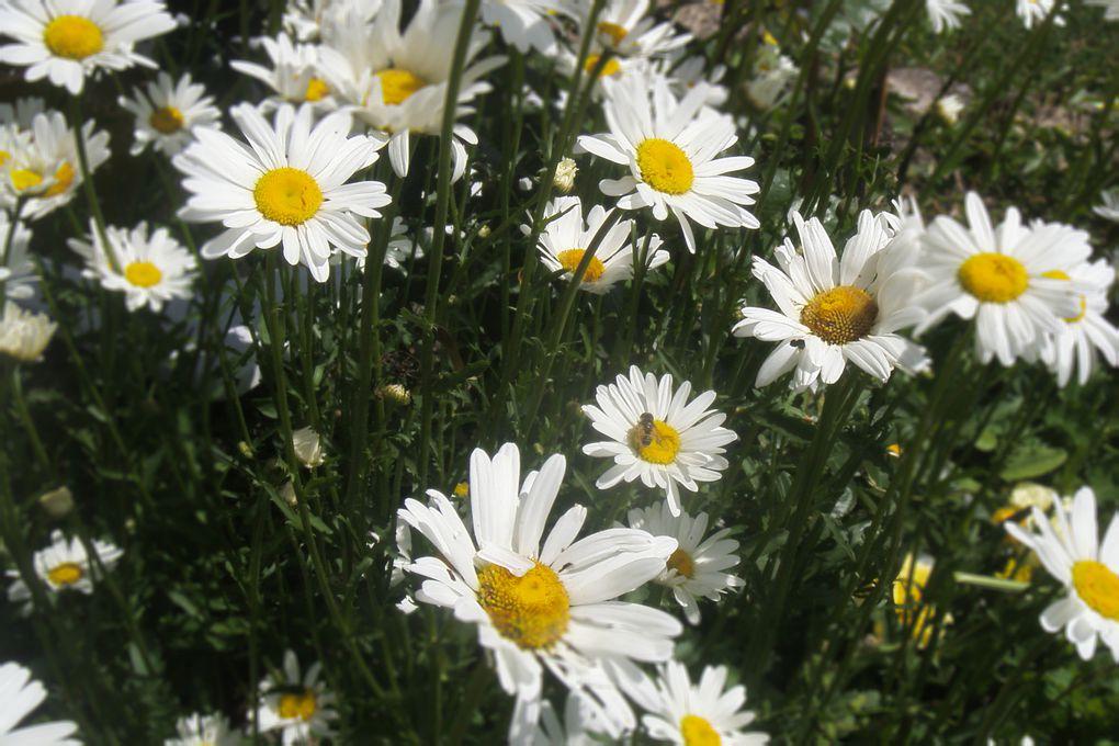 Album - autres-fleurs-de-jardin