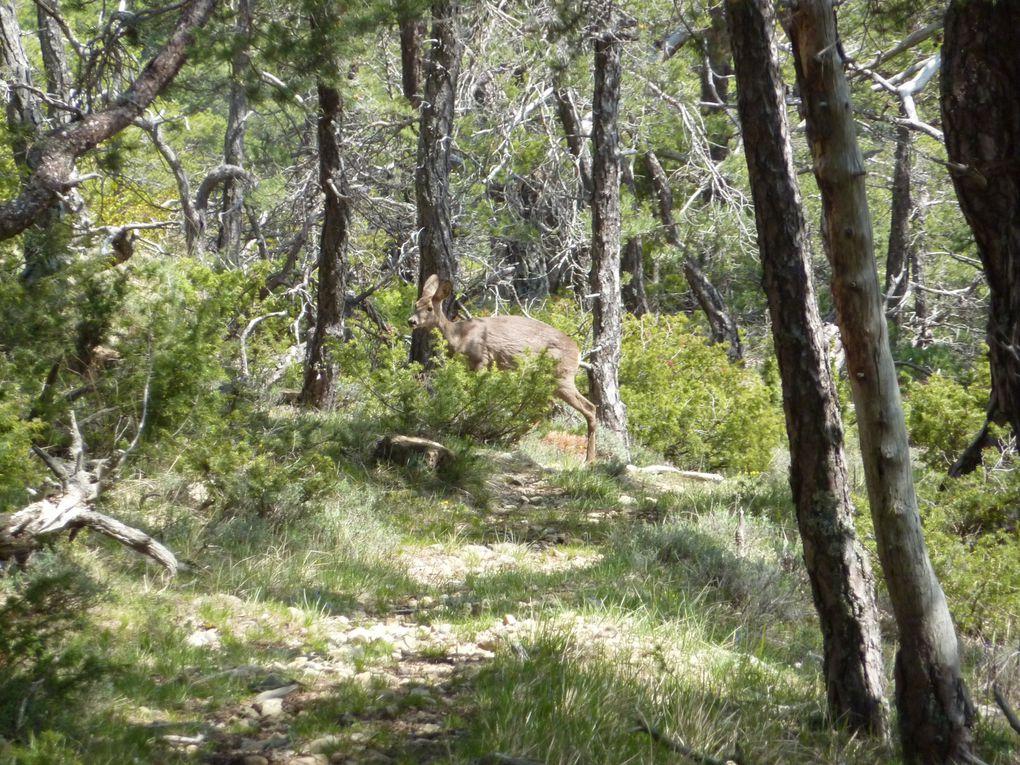 croisés lors de nos randonnées pédestres et vététesques !!
