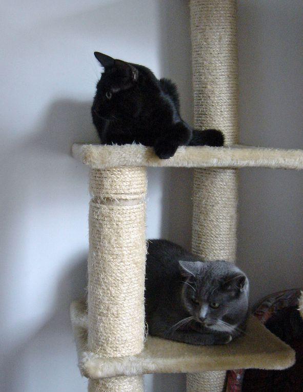 2 chatonnes trappées à Montigny le samedi 9 juillet.