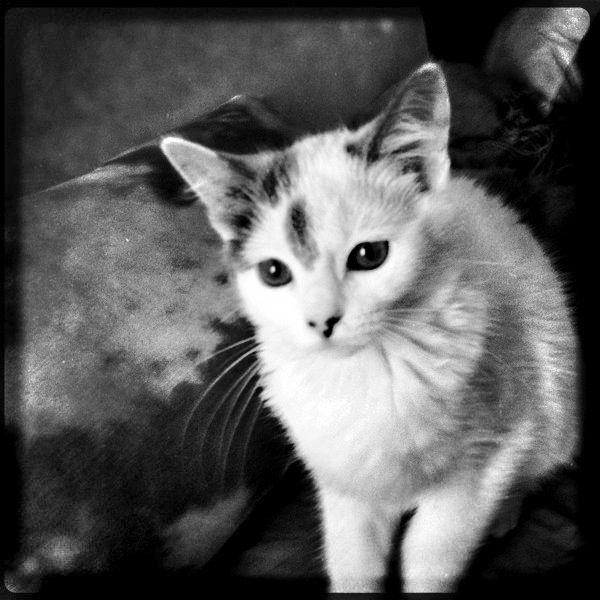Un chaton trouvé seul à un arrêt de bus retrouve miraculeusement sa Maman et sa soeur une semaine après.