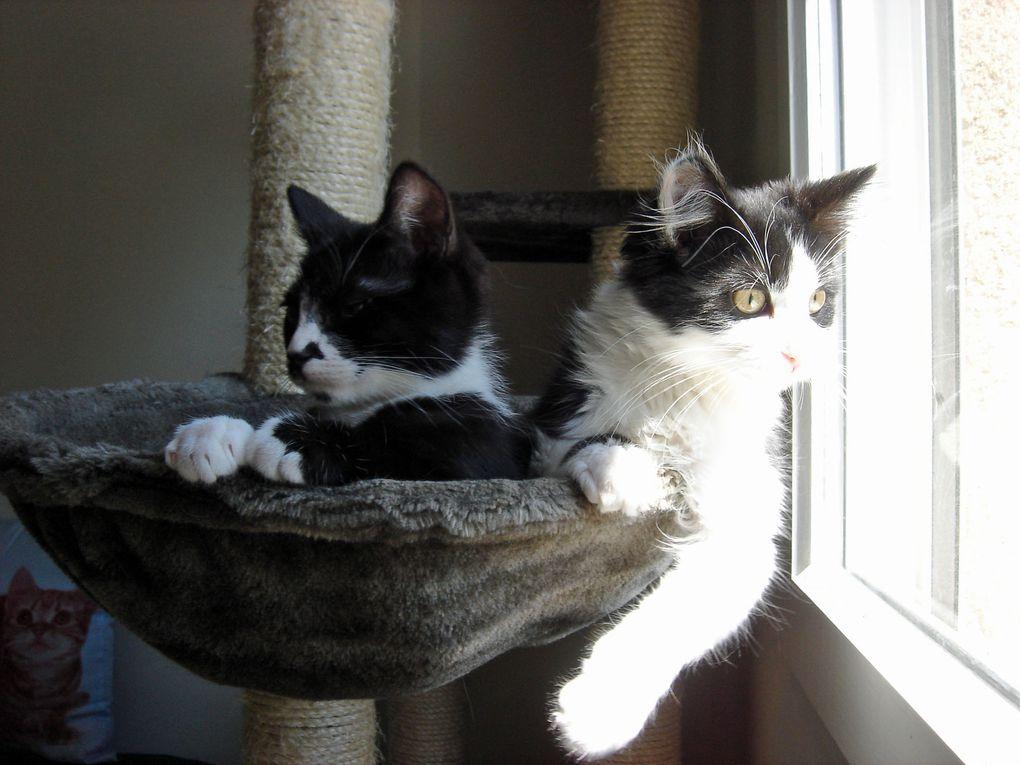 Deux p'tits mecs noir et blanc puis après l'adoption d'un des deux frères, l'arrivée de la Belle Théa.