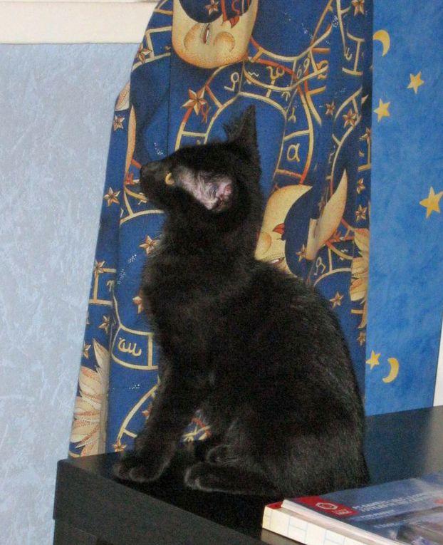 uatre chatons nés dans une cabane de jardin à Villeparisis début avril 2013.