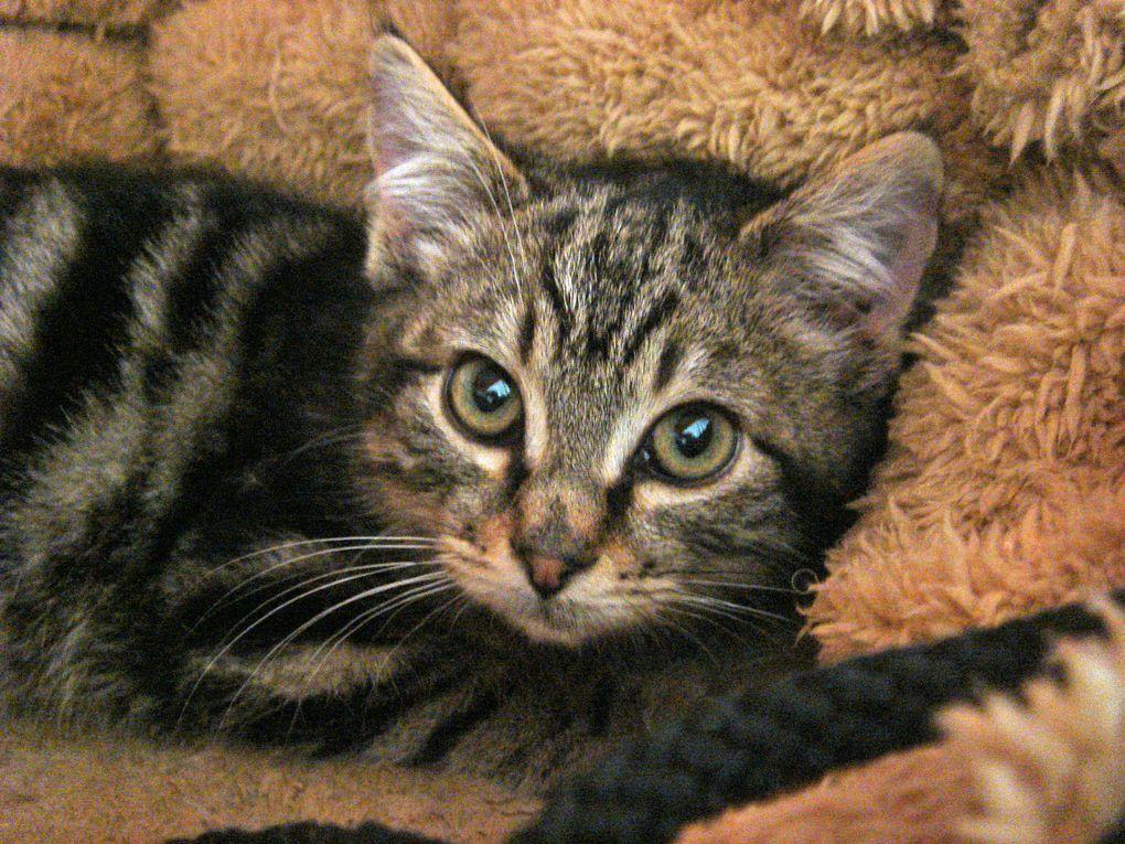 Une portée de 4 chatons nés dans le jardin d'une amie des chats et qui ont grandi entre félins. Ils doivent à présent apprendre que les humains peuvent être des alliés bienveillants !