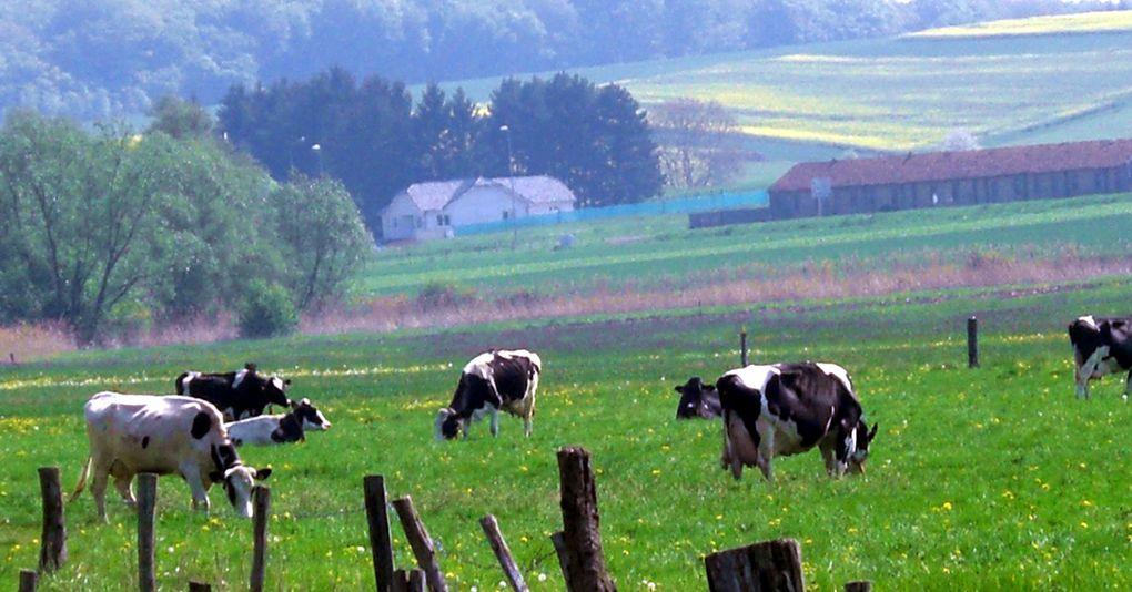 balade à Boulay, Roupeldange, Guinkirchen, Mégange, Drogny, Piblange. Baraques jaunes, reliquat de la Ligne Maginot.
