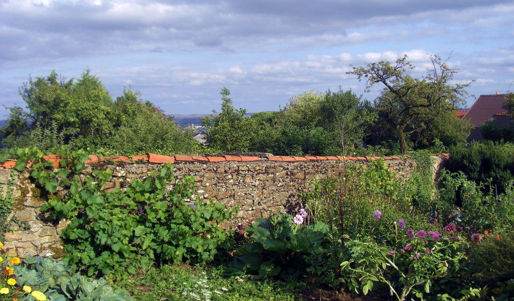 Découverte du dernier AOVDQS Moselle, Auxerrois primé en 2008 lors de la fête de la vigne à Marange-Silvange - 6 septembre 2009 -