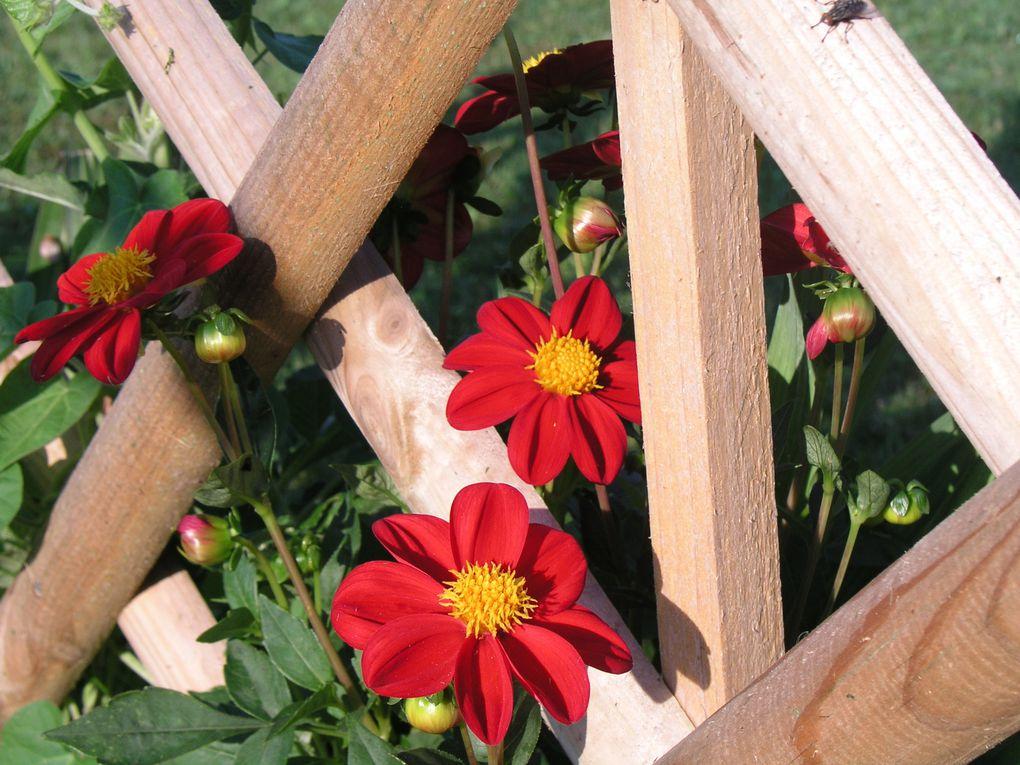 Les fleurs de mon jardin...