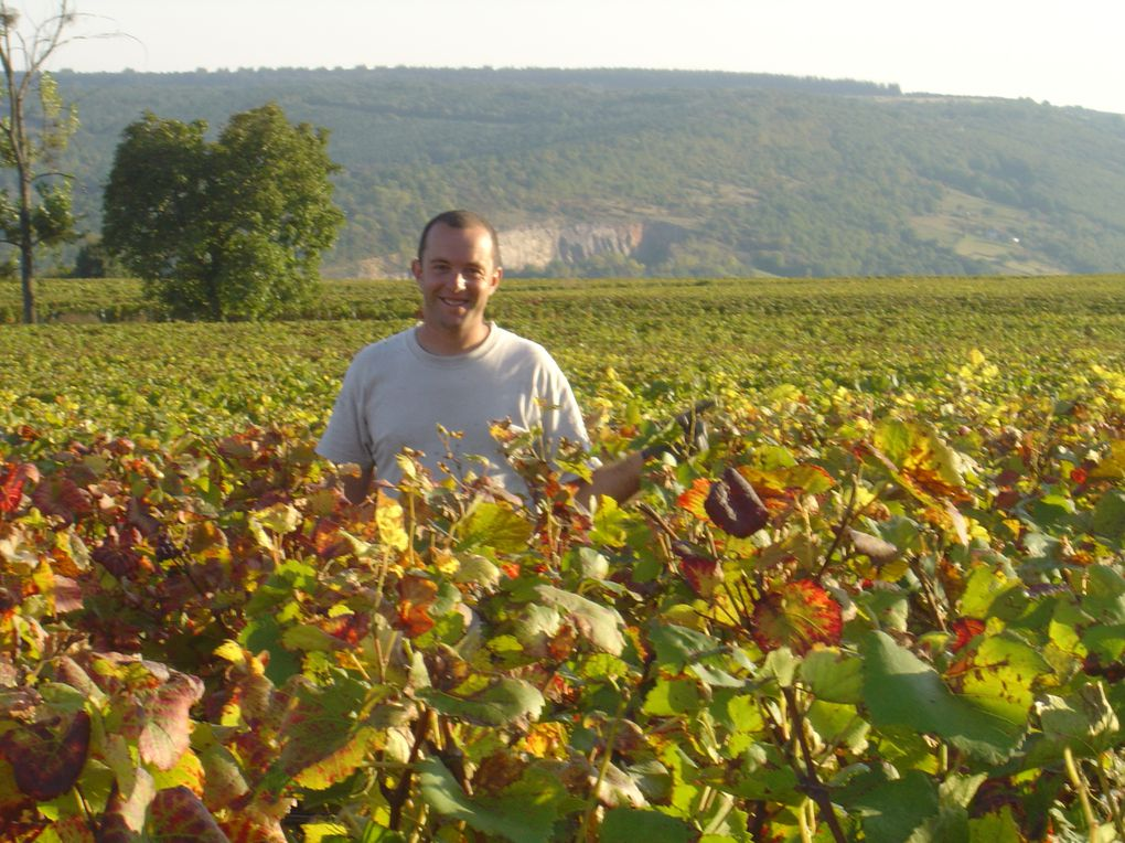 Album - Vendanges-2008