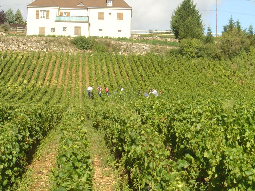 Album - Vendanges-2009--3-
