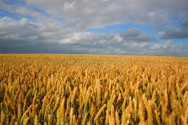 Album - Harvest