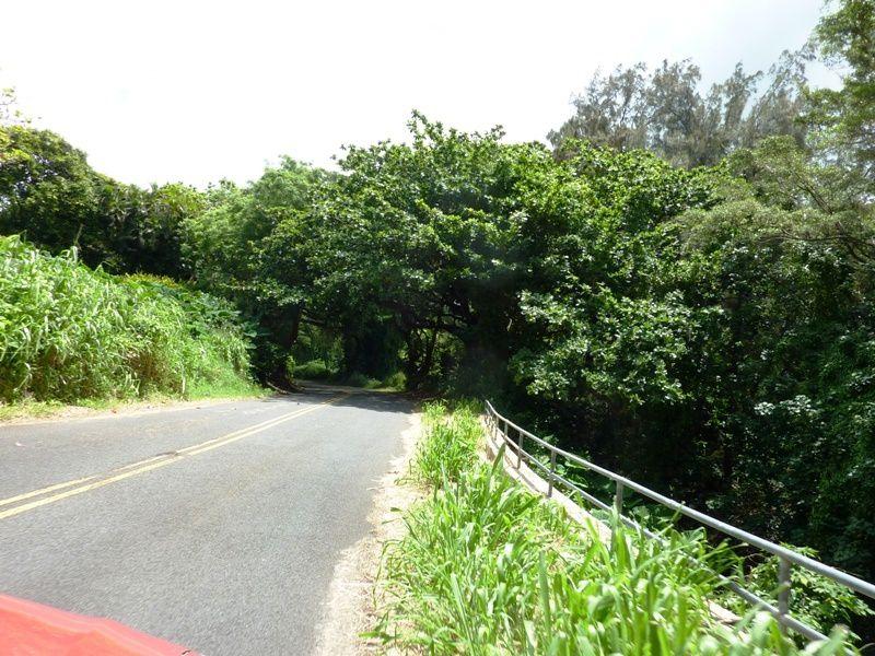 Album - 84 - Hawaii - Lifestyle Part1
