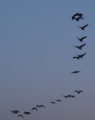 Album - A tire d'ailes