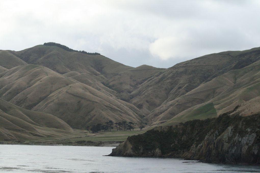 Album - 31.Nouvelle Zelande NORD