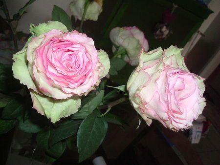 Album - Fleurs