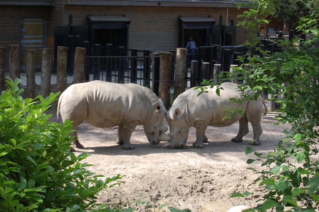 Album - sortie au zoo 2012