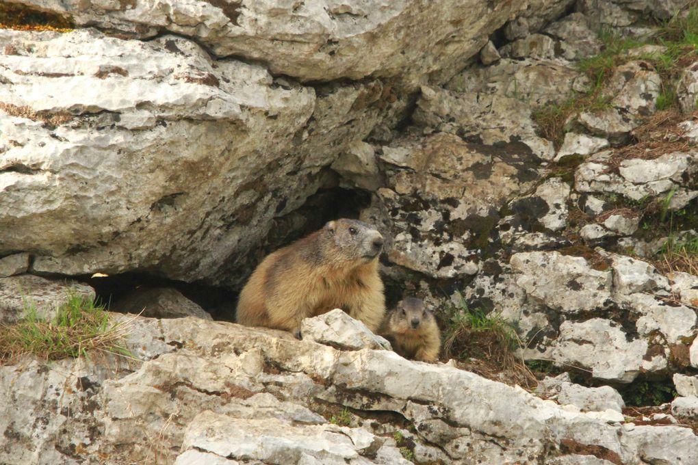 Album - Marmottes