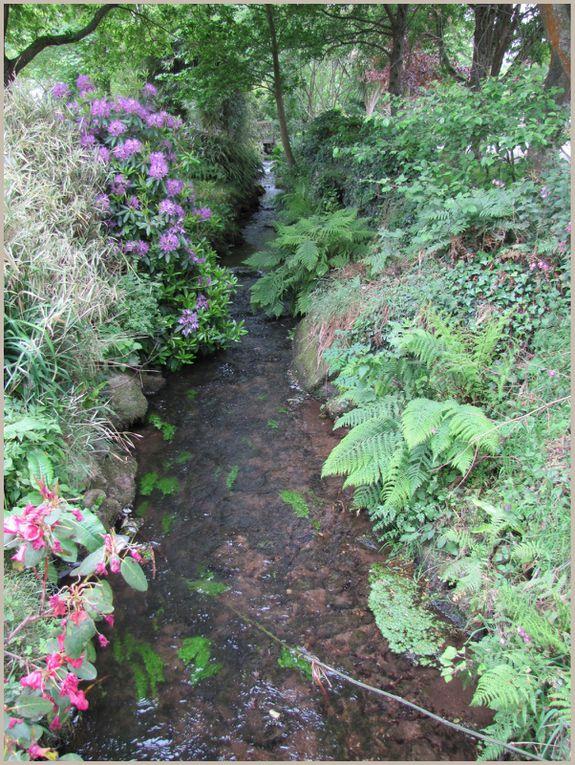 Feuillages, fleurs, eau, mer, côte Finistère