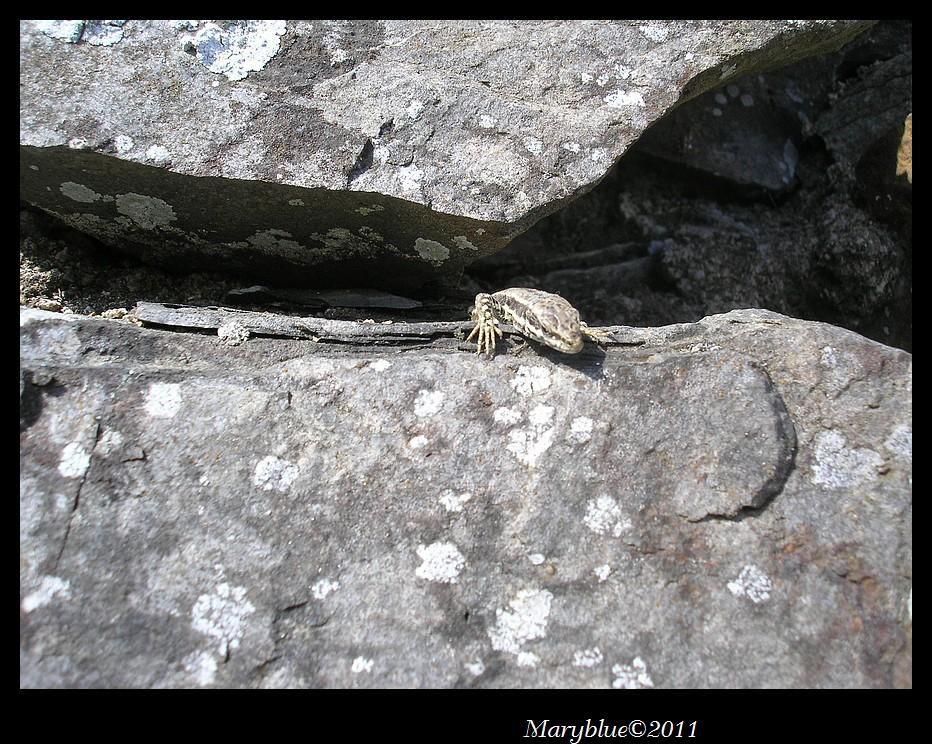 A la rencontre des insectes et autres petits animaux sur les chemins de randonnée.
