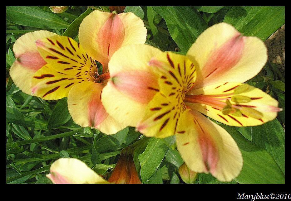 Album - Parc-floral-Haute-Bretagne