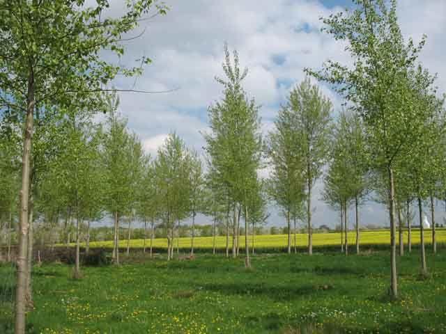 Poésie du printemps et des vergers d'arbres fruitiers en fleur.....