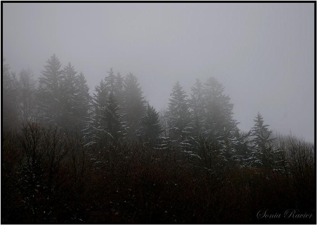 « Penser, c'est chercher des clairières dans une forêt ».Jules RenardEcrivain français