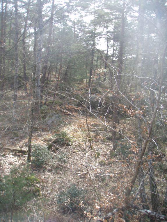 Album - Fontainebleau 12 mars