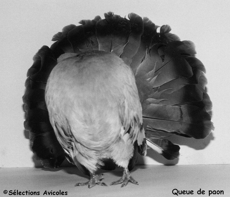 Album - PIGEONS
