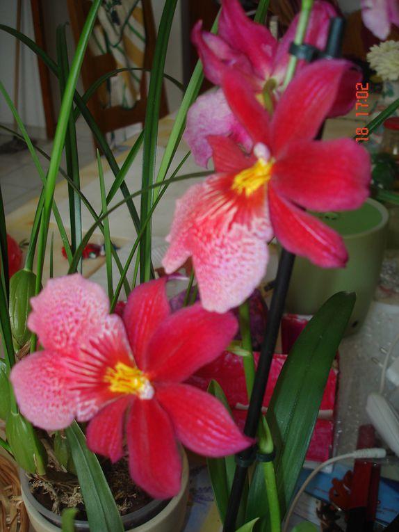 Mes orchidées et fleurs du jardin